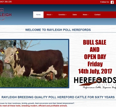 Rayleigh Poll Herefords